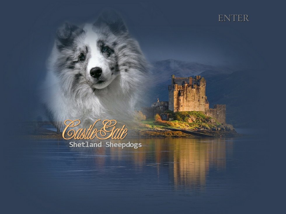 Welcome to CastleGate Shelties